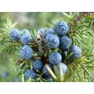 Juniperberry Essential Oil 10ml
