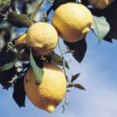 Lemon Essential Oil 10ml