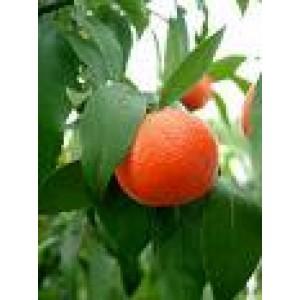 Mandarin Essential Oil 10ml
