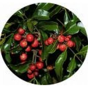 Bois De Rose Essential Oil 10ml